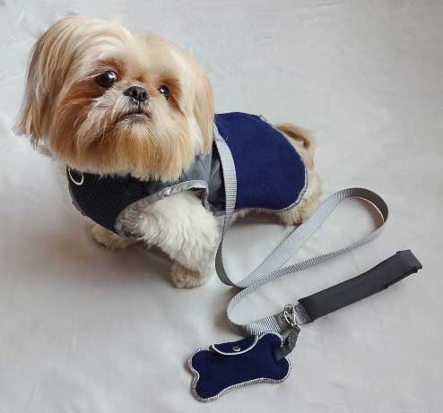 shih tzu wearing a harness
