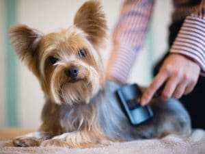 brush matted dog hair