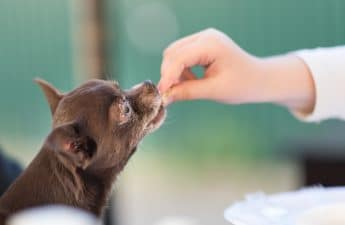 Can I Give My Dog Human Vitamins & Supplements?