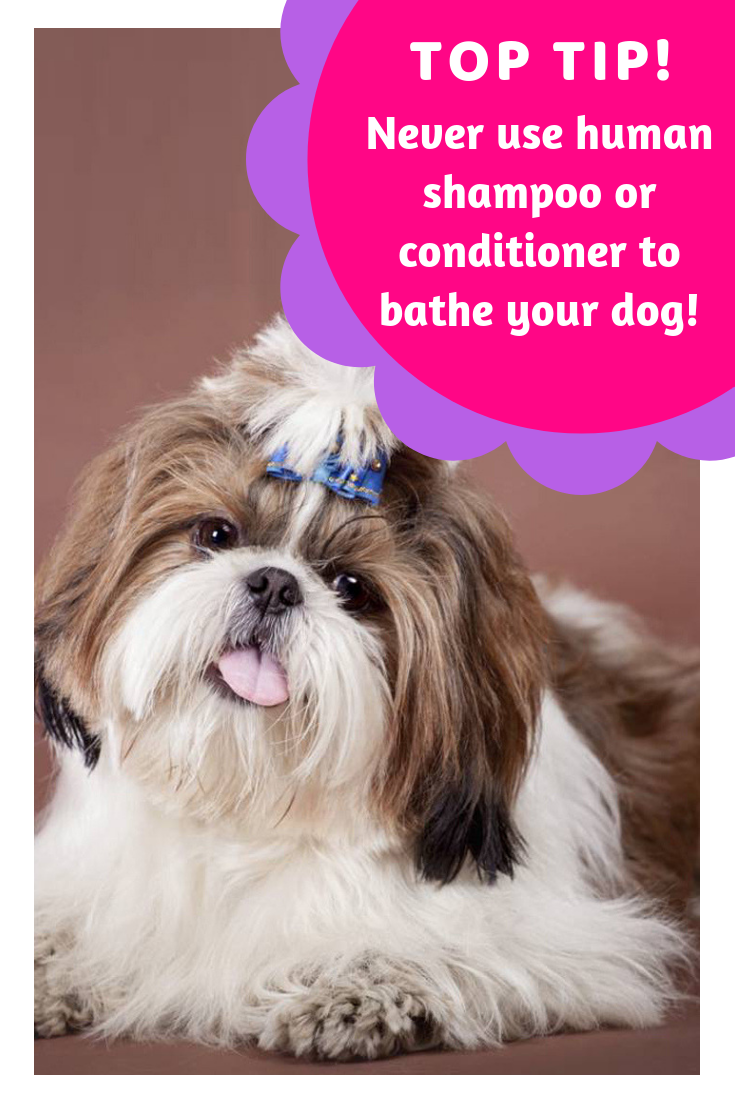 how to make your dogs coat shiny top tip