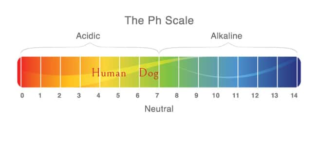 ph scale best shampoo shih tzu