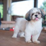 Best Clippers For A Shih Tzu – Reviews