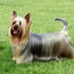 How To Make Your Dog's Coat Shiny And