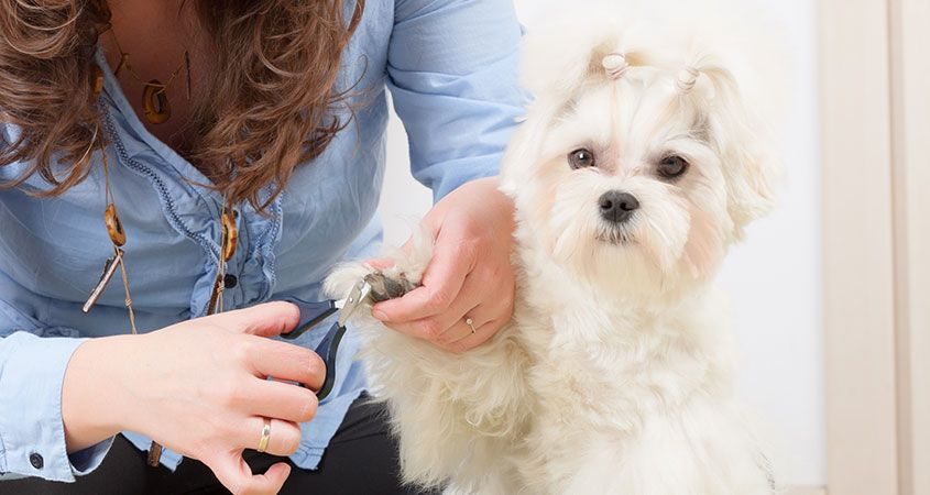 nail clippers for small dogs
