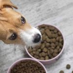 dog food allergy kits