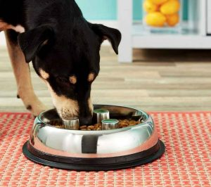 top dog chews slow feeder dog bowl