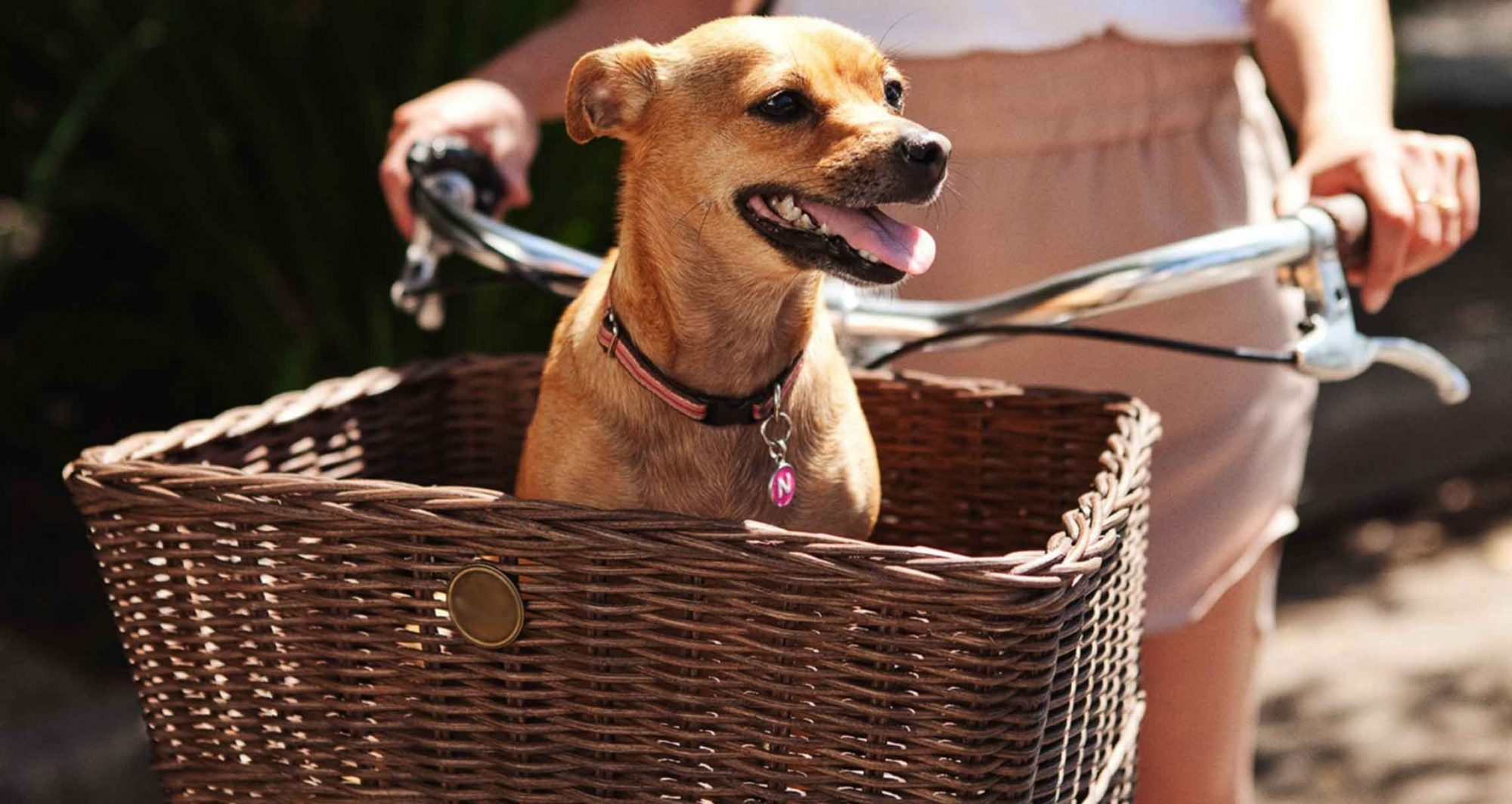 bike basket for a small dog