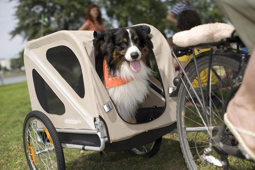 bike trailer for small dogs