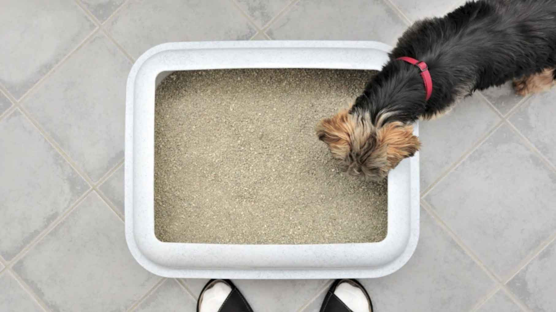 dog litter trays
