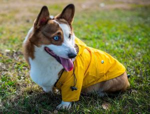 ellie wear dog raincoat