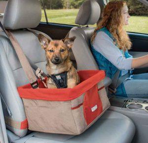 Shih tzu sitting in car seat