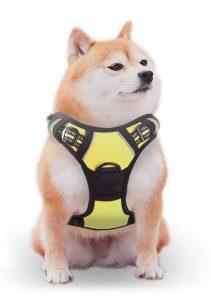rabbitgoo shih tzu harness