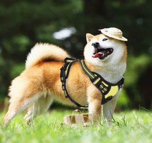 rabbitgoo small dog harness