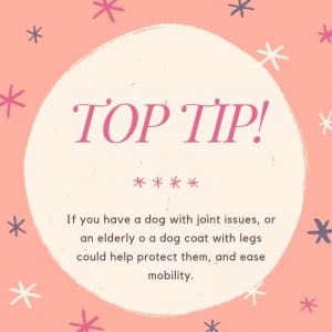 top tip dog coat