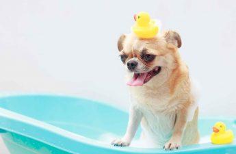 home dog bath