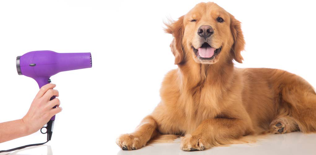 dog hair dryers