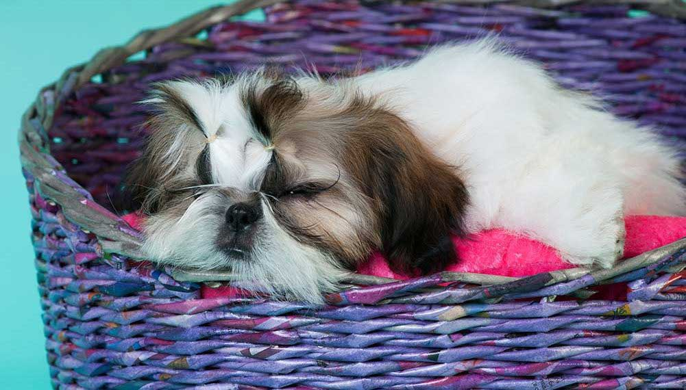 dog beds for shih tzu