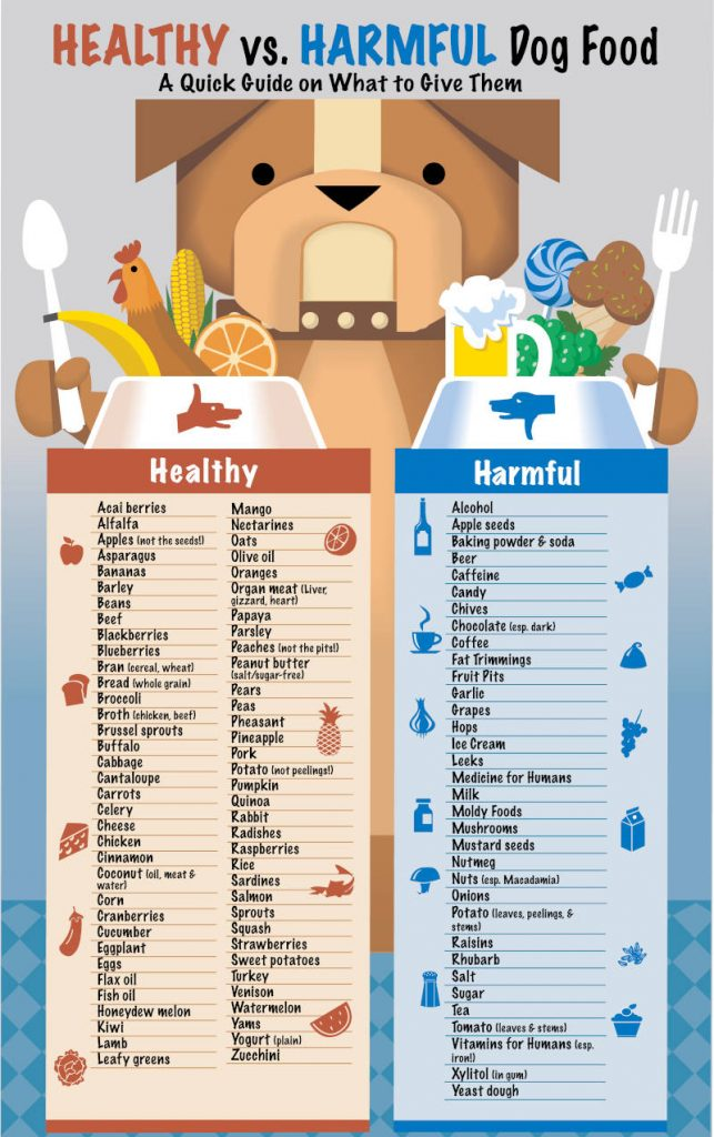 toxic food for shih tzu infographics