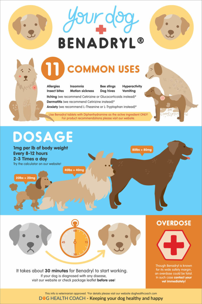 Benadryl for dogs infographic