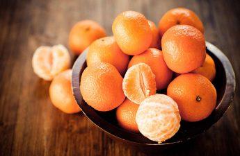 can shih tzu eat oranges