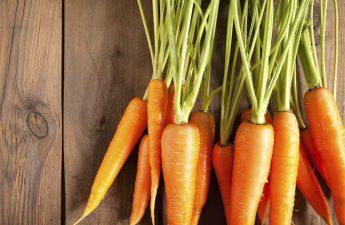 can shih tzu eat carrot