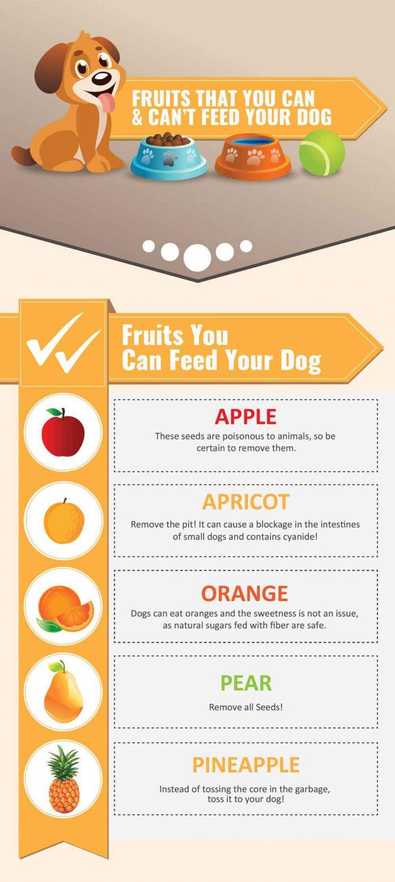 can shih tzu eat oranges infographic