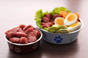 raw food diet for Shih tzu